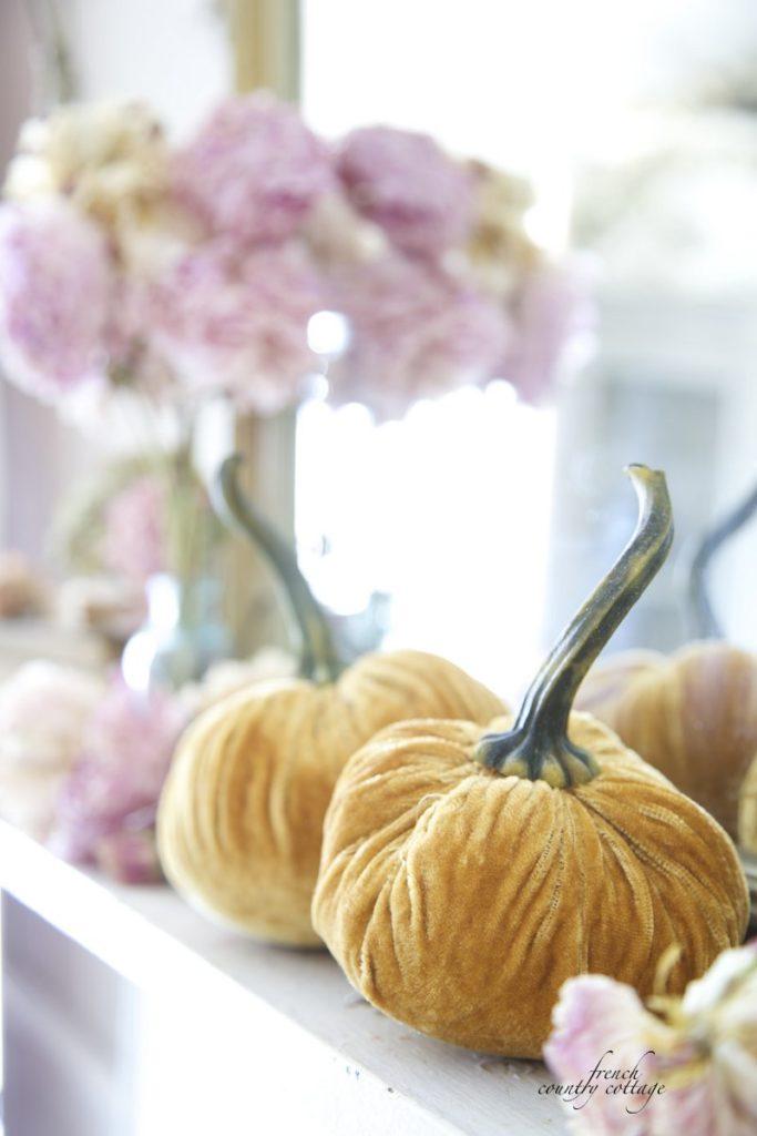 Velvet Pumpkins Autumn