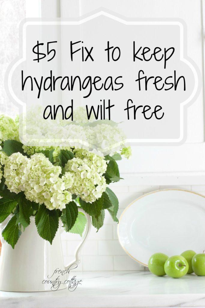 hydrangeas fresh, no wilt, secret fix