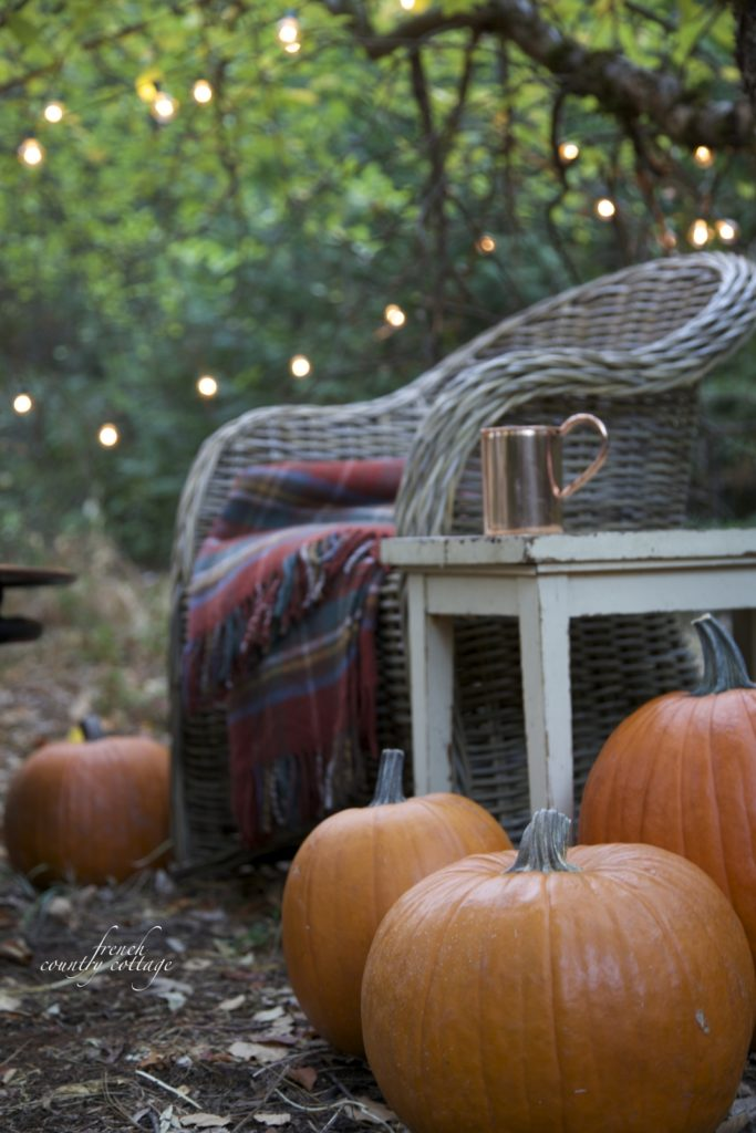 pumpkins and chair in apple orchard