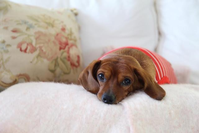 Sebastian dachshund pajamas