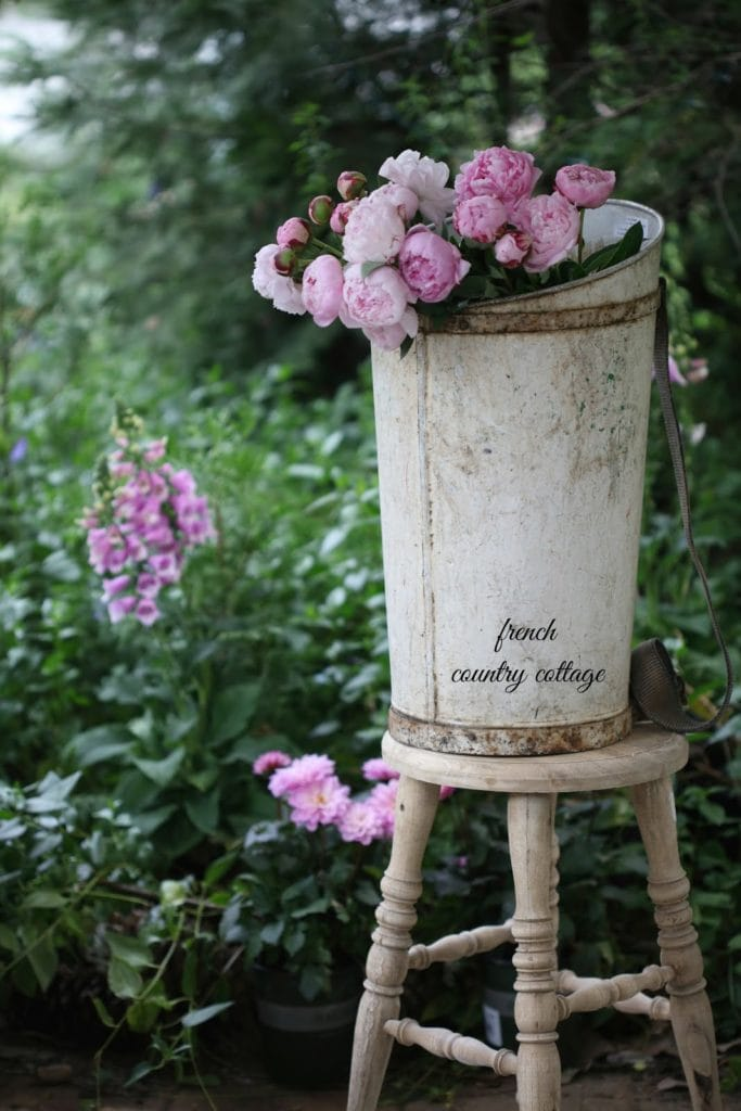 antique vintage grape harvesting bucket with flowers on stool