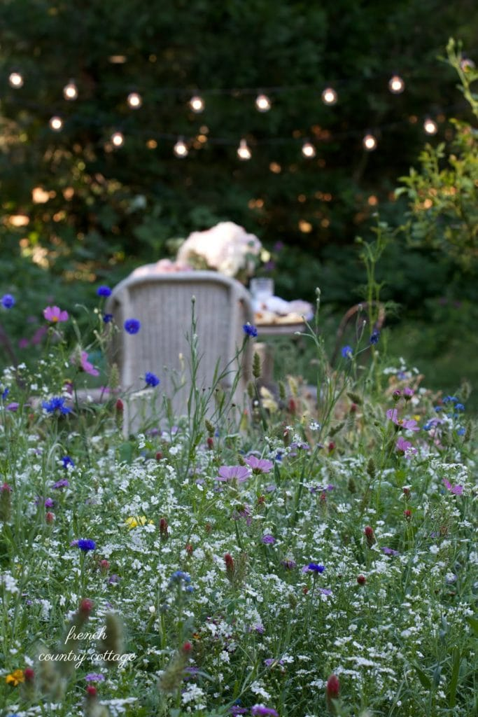 wildflower garden by she shed