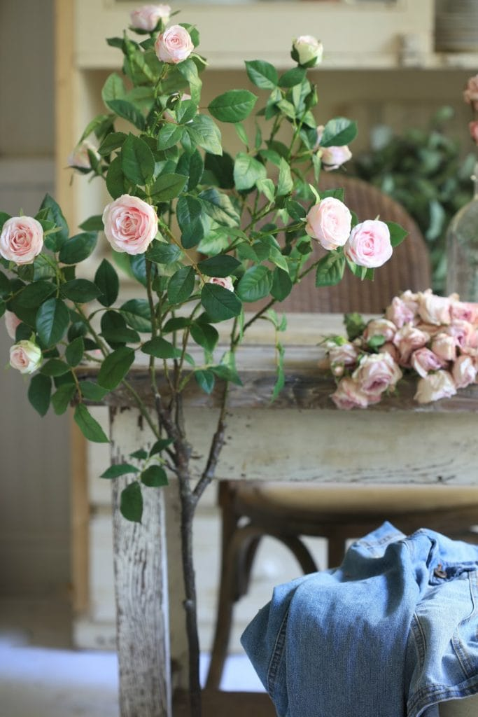 potted rose tree