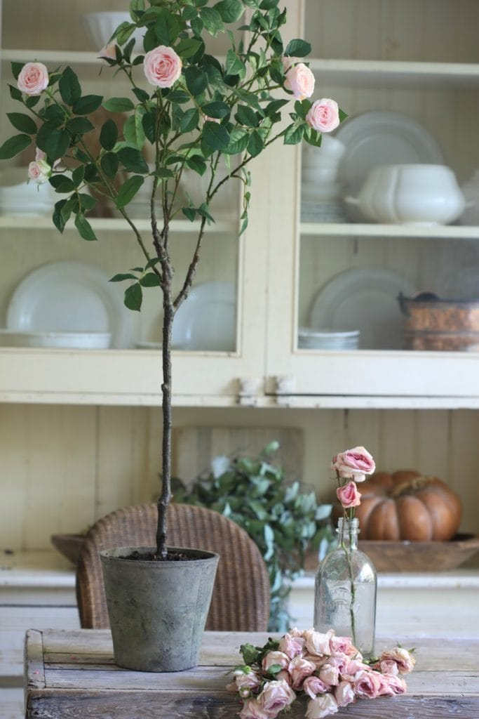 rose topiary tree in cottage