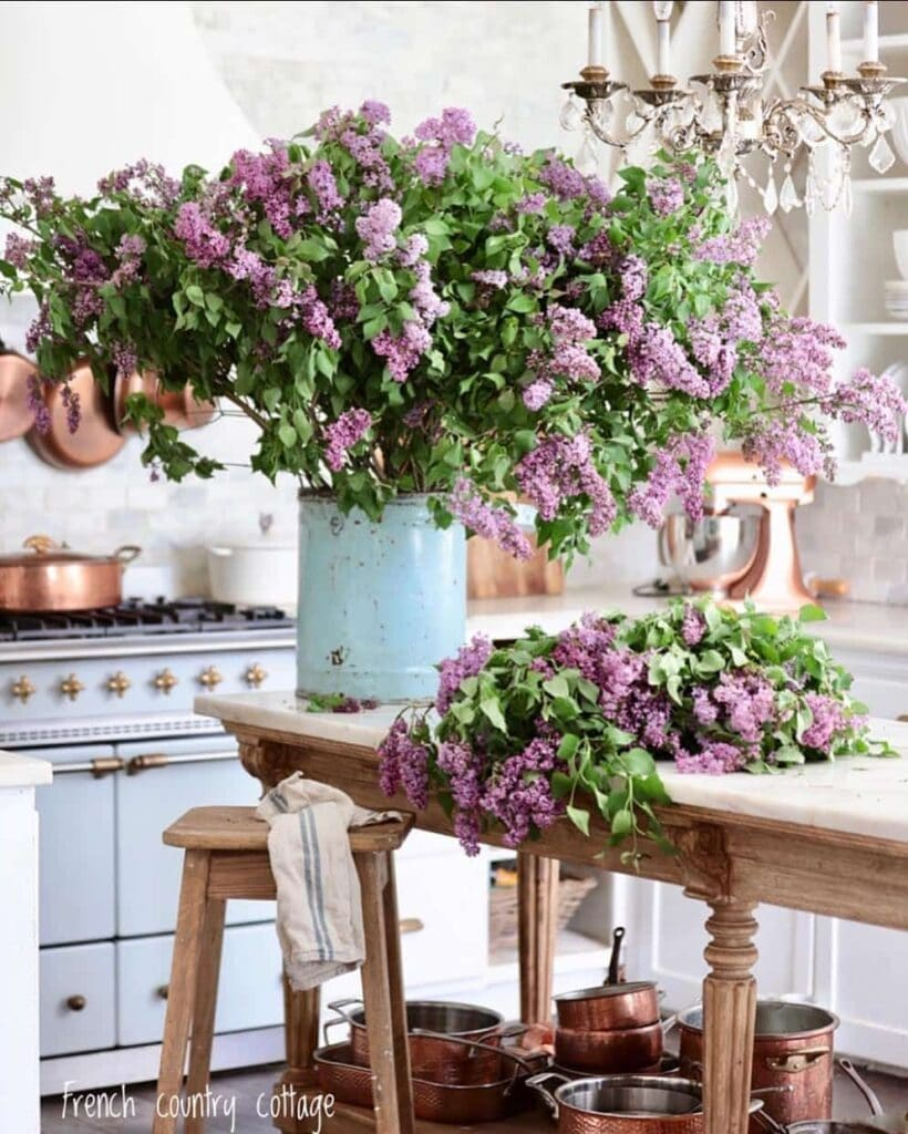 Bucket of lilacs in the kitchen