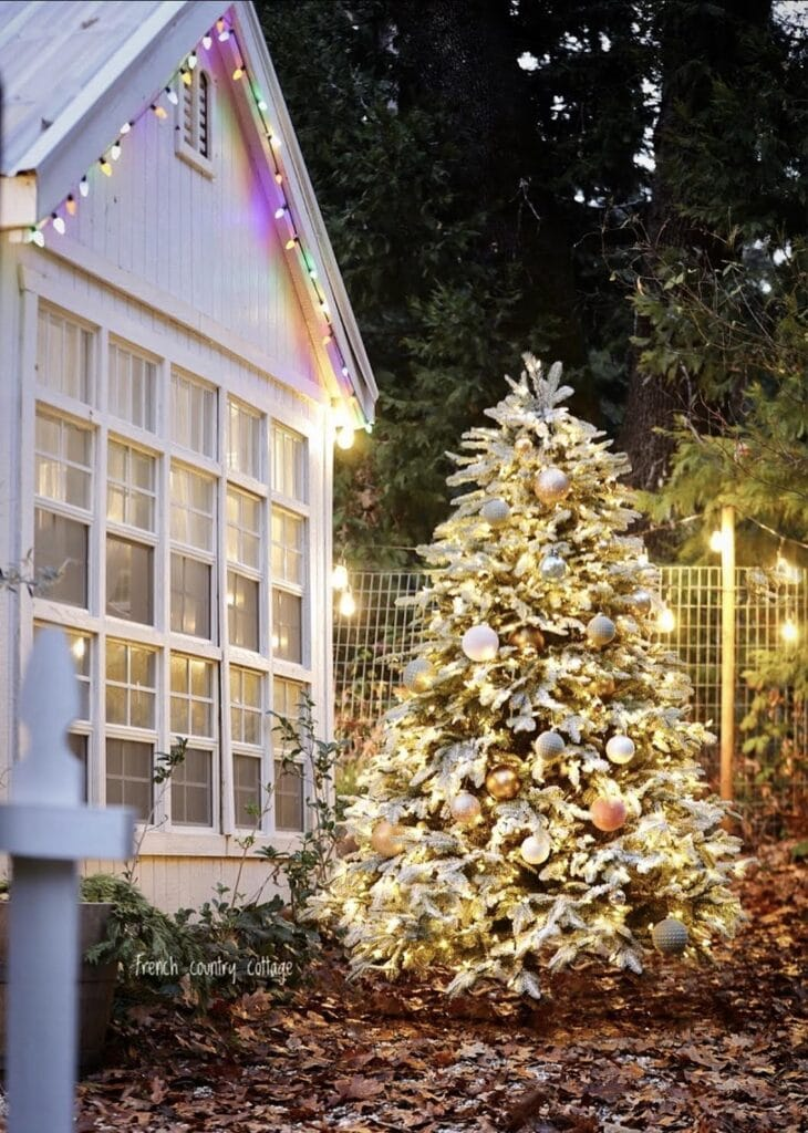 Christmas Tree in Greenhouse garden
