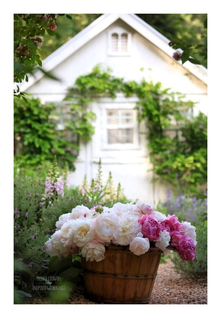 Peonies in basket in front of greenhouse