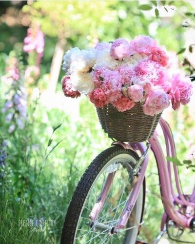 beach bike with peonies