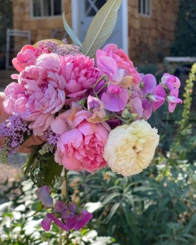French Country Cottage Garden Roses
