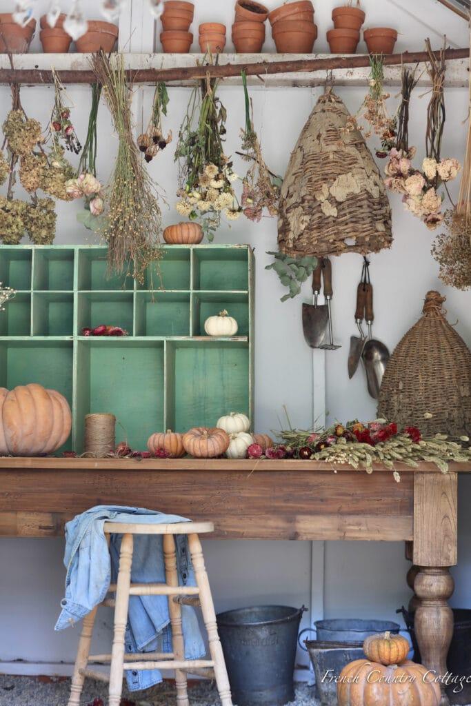 pumpkins in potting shed