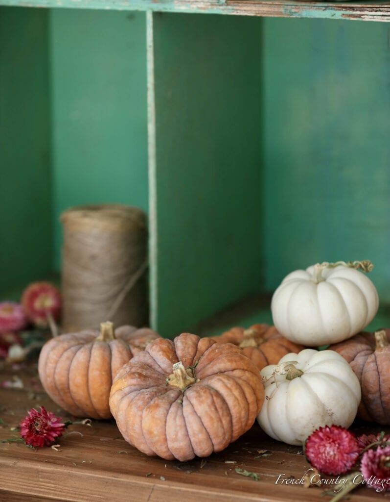 mini heirloom pumpkins