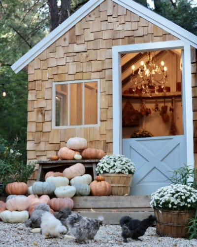 pumpkins and autumn potting shed